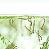 Обработка водоема от личинок комара